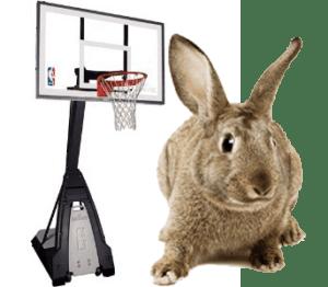 giant rabbit by basketball hoop